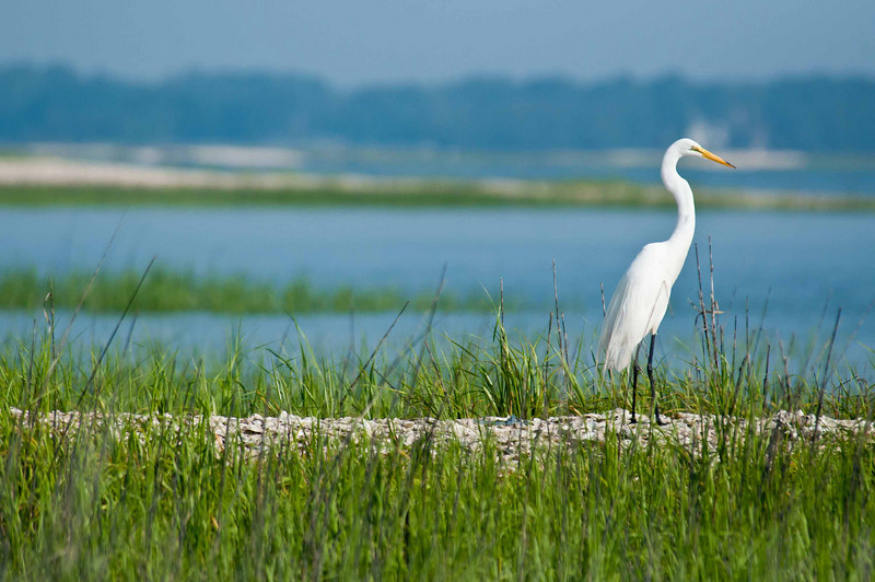 HHI Bird Expedition-021