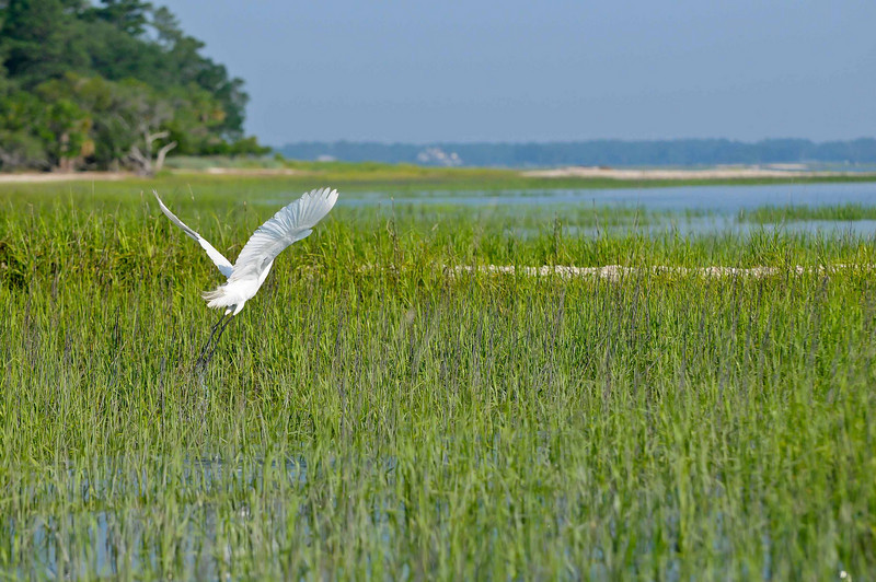 HHI Bird Expedition-016