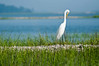 HHI Bird Expedition-020