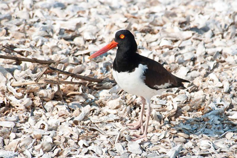 HHI Bird Expedition-022