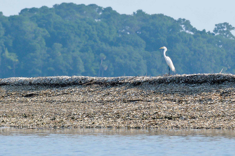 HHI Bird Expedition-002