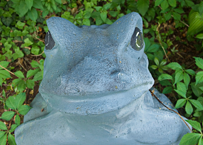 Frog in front of a house, Hull, MA