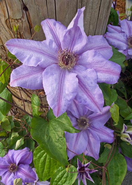 Flowers, Hull, MA