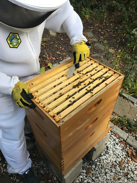 Box E: D1 D8, F2, F4, F6, F8, D2, C8.<br /> This box is 75% + dry capped honey surrounded by wet honey. Strange existance of pupa cover outside face of first frame D1 on west side.
