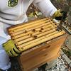 Box C:  C1, M3  ,   , Apivar,C2, Apivar, E6, C7 invrted, C6. Brood and capped honey.