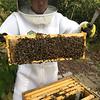 Box E&M deep. M5 90% bee cover!  over ? brood? or wet honey?.... 5% capped honey edge,