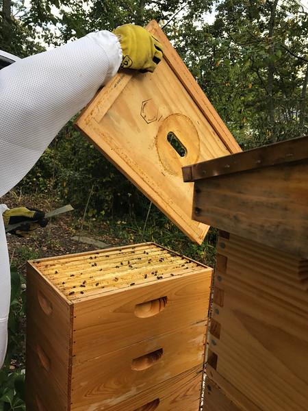 Box F :  F1, D2, F3, D4  ,F5, D6, F7, andv D7<br /> Largely 75+ % capped honey