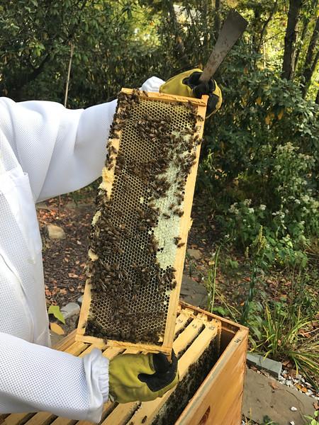 D1 East  20%capped honey on top, 70% wet honey