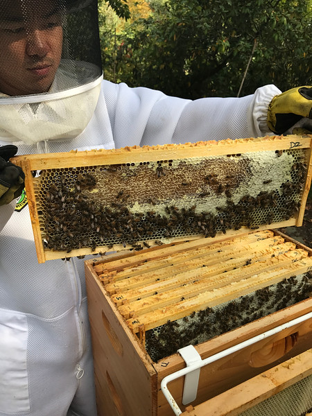 D2  West 3/5 capped honey, 2/5 wet ... bees over 2/5