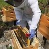 Hive #2 Box M:  M1, B3, B, B, B, B, B, M8