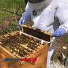 Hive #1 Box C:  C1, C2, C3, D5, C4, C5, C6, C7, C8.
