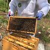 Hive #1 Original Deep: EM, new, EM, new, EM, EM, new, EM.