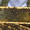 Hive #1 Box B: B1. B2, B3, B4, B5, B6, B7, B8.