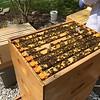 Hive #1 Box C:  C1, C2, C3, D5, C4, C5, C6, C7, C8.v