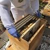 Hive #2  Box B: M2, M3, M4, B , B,  M5, M6, M7.