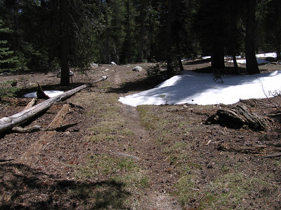 A first patch of snow along the trail, at about 8000 feet altitude.