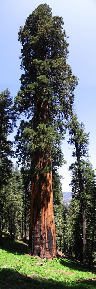 Hockett Plateau, Sequoia National Park, May 2007