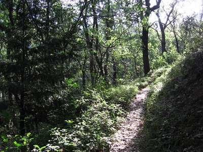 Portions of the lower trail were/are a bit overgrown. Some of that greenness is poison oak, so long pants are advised...