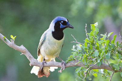 Hoffman Ranch for Coastal Bend Wildlife Photo Contest