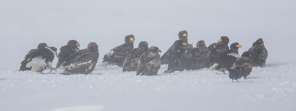 Group of Eagles in blizzard
