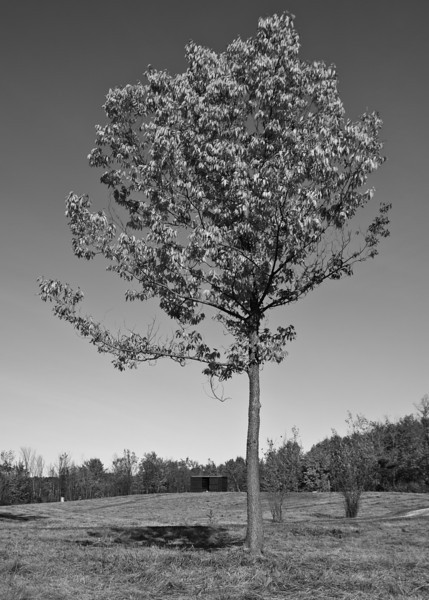 Trees by Corning Lake