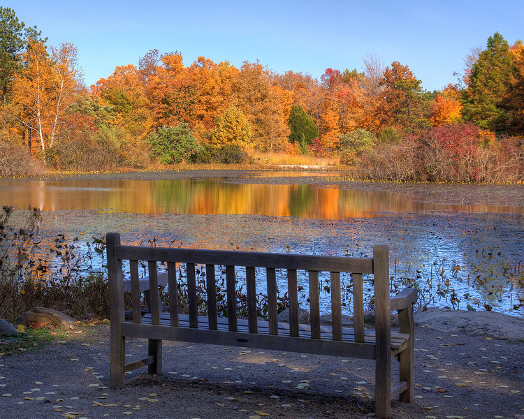 Bench by Blueberry Pond