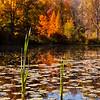 Foster Pond