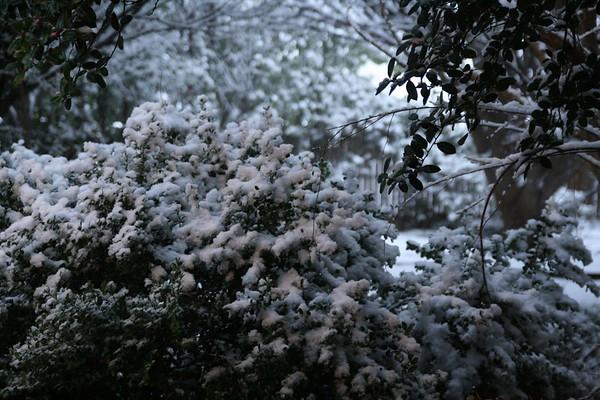 Home Snow 2-11-10
