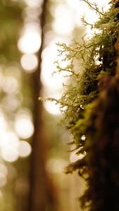 Lichen, Lake Angeles, Olympic National Forest, WA