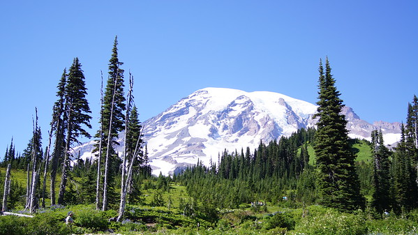 Paradise, Mt. Rainier, WA