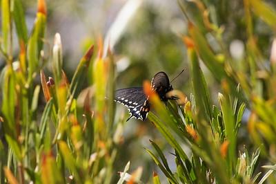 Butterfly, Sonoran Desert Museum, AZ