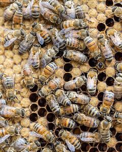 Honey Bee Hives at Concordia's City Farm School
