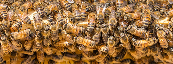 Honey Bee Hives at Concordia's City Farm School