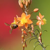 BEES_0006