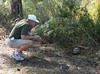 Gopher tortoise #1: Dad struggling to catch up to it.