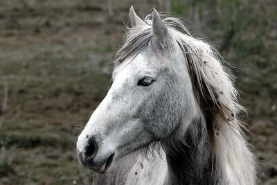 OBX Wild Pony