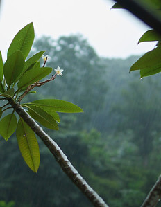 Quebradas, Costa Rica June 2013  Afternoon rains come down fast and furious.