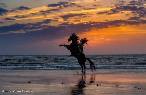 Horses on the beach 2018