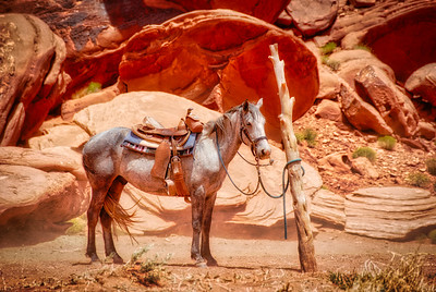Horse in Monument Valley - Photo Taken: June 14, 2014