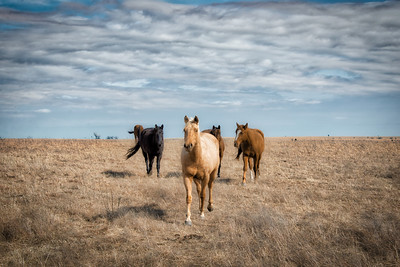 Horse in the countryside near Strong City, Kansas - Photo Taken: March 4, 2018