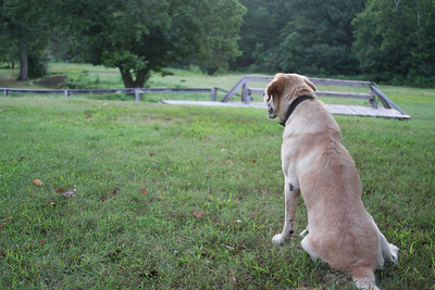 Sadie watches over things at Panther Valley Ranch.