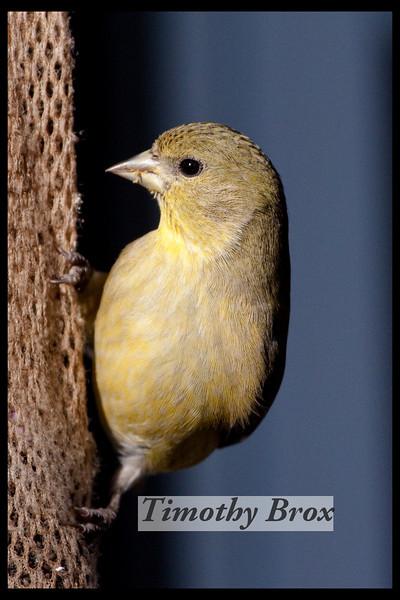 Birds 122808-0639