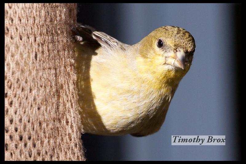 Birds 122808-0635