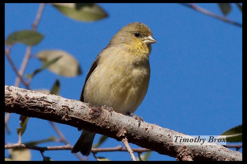 Birds 122808-0618
