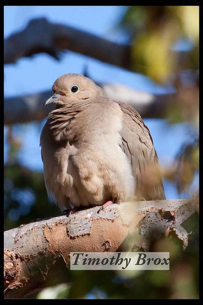 Birds 122808-0614