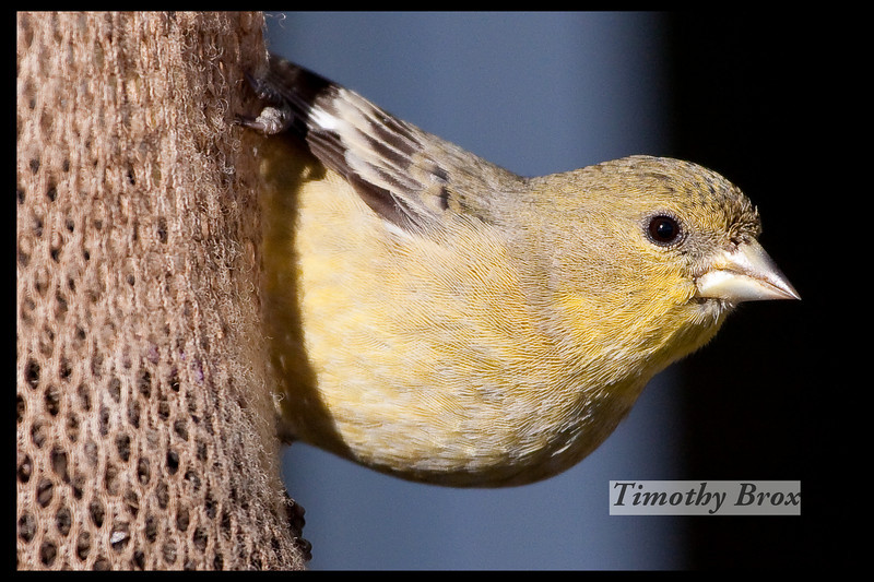 Birds 122808-0642