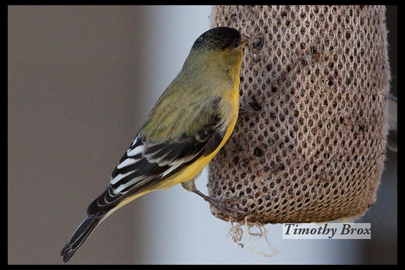 Birds 122608-0242