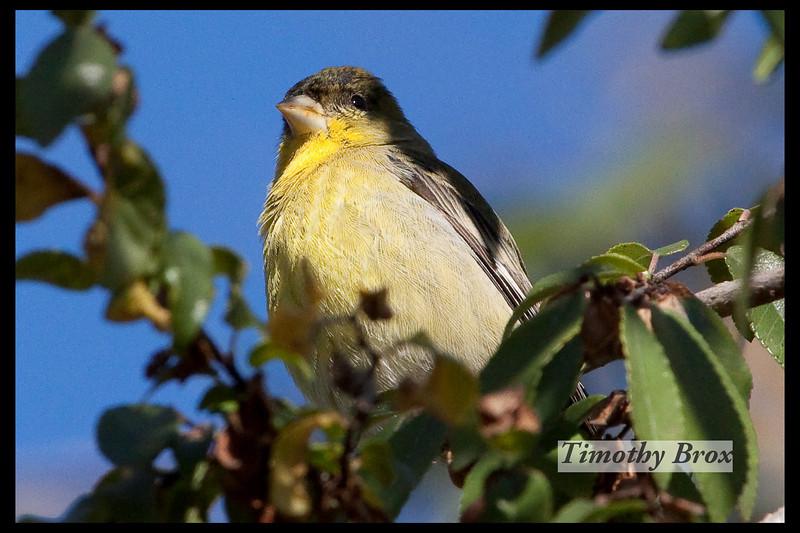 Birds 122808-0608