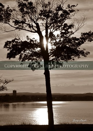 sepia Tree sunset 12x17  DSC_9135