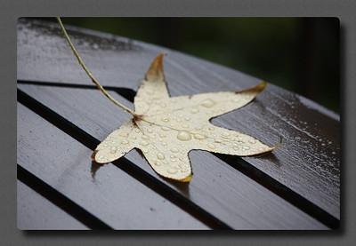 Just a leaf on my deck.